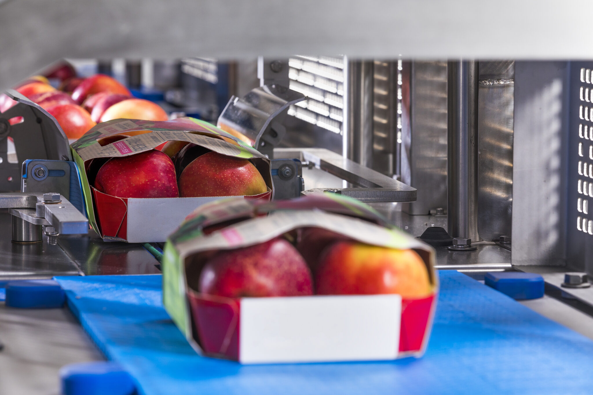 JASA_sleever-apples