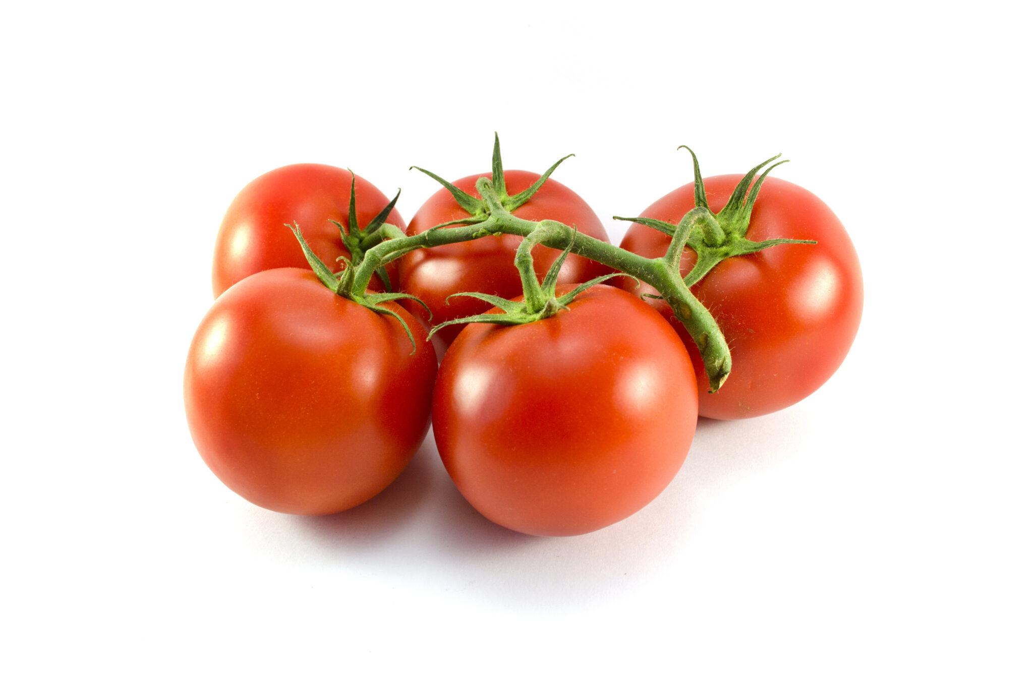 Tomatoes_(copy_1)